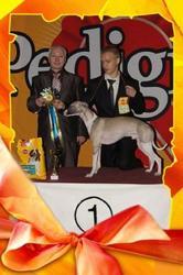 Хендлеры. Подготовка и показ собак на выставках.